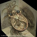 Sehnerven des Visible Human nach Leonardo da Vinci