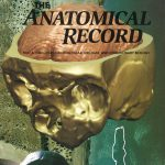 Anatomical Record 276A, Nr. 2, 2004