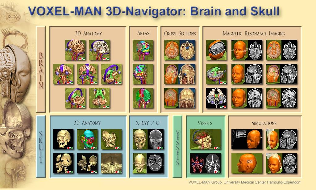 Inhaltsverzeichnis von Voxel-Man 3D-Navigator: Brain and Skull