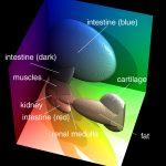 Für die Klassifikation verschiedener Gewebetypen des Visible Human verwendete Ellipsoide im RGB-Farbraum