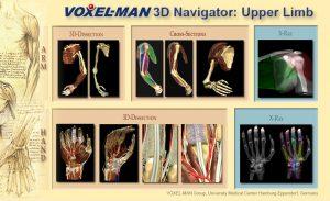 Inhaltsverzeichnis des Voxel-Man 3D-Navigator: Obere Extremität