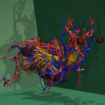 Arterien (rot), Venen (blau), Luftröhre und Bronchien (gelb) und innere Organe des Visible Dog