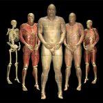 Verschiedene Stadien der virtuellen Präparation des Visible Human
