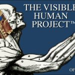 Logo des NLM Visible Human Project