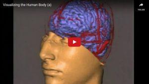 Visualizing the Human Body